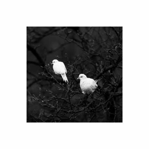PicsArt 01-19-04.01.18
